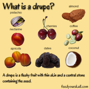 MovePT-Drupe-Fruits
